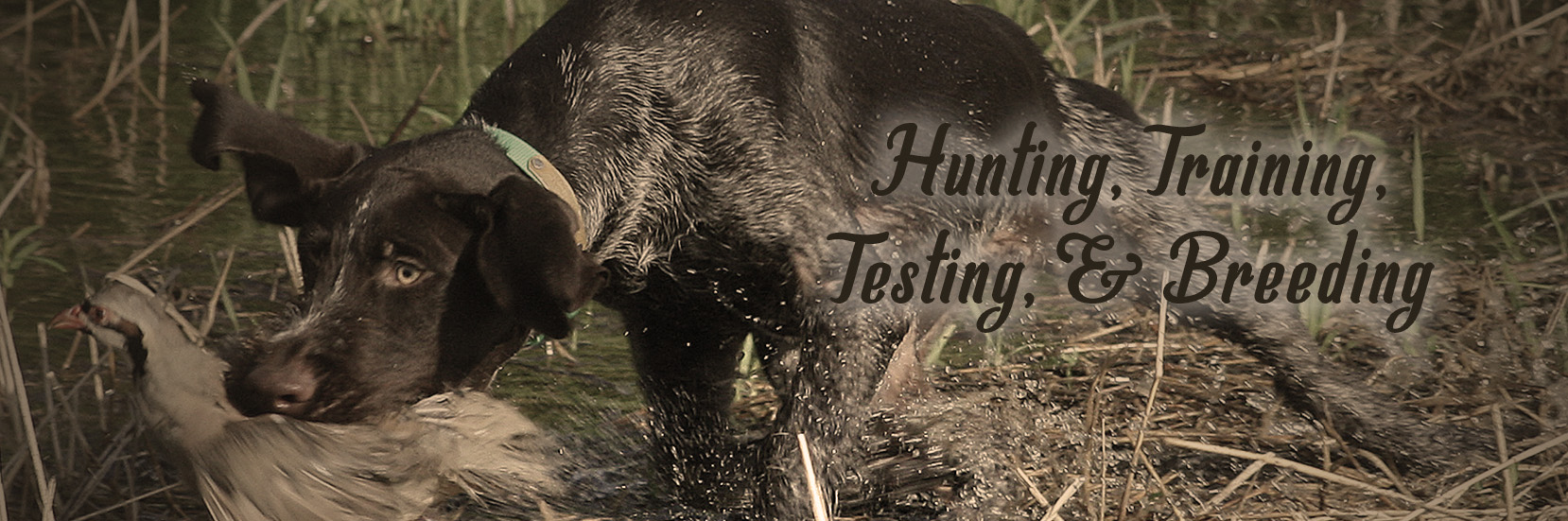 Hunting, Training, Testing, Breeding